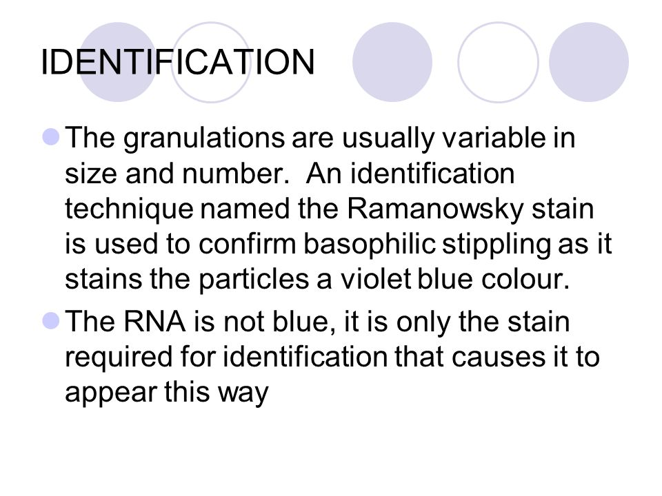 IDENTIFICATION The granulations are usually variable in size and number. An identification technique named the Ramanowsky stain is used to confirm bas