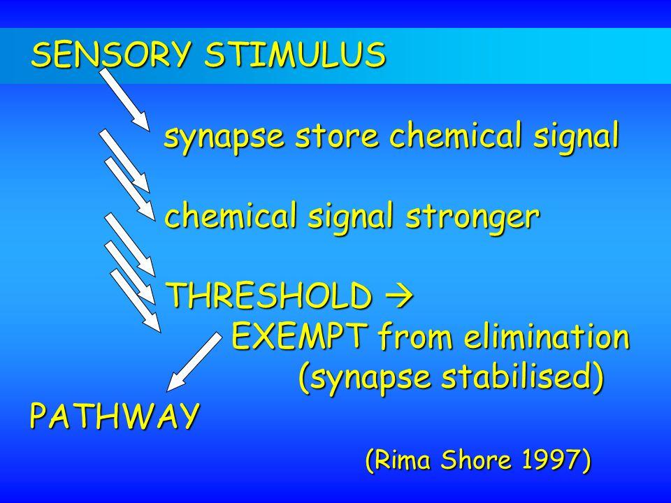 SENSORY STIMULUS synapse store chemical signal chemical signal stronger THRESHOLD THRESHOLD EXEMPT from elimination (synapse stabilised) PATHWAY (Rima
