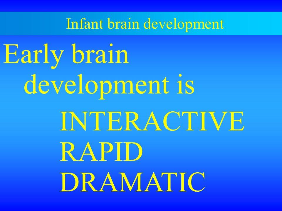 Infant brain development Early brain development is INTERACTIVE RAPID DRAMATIC