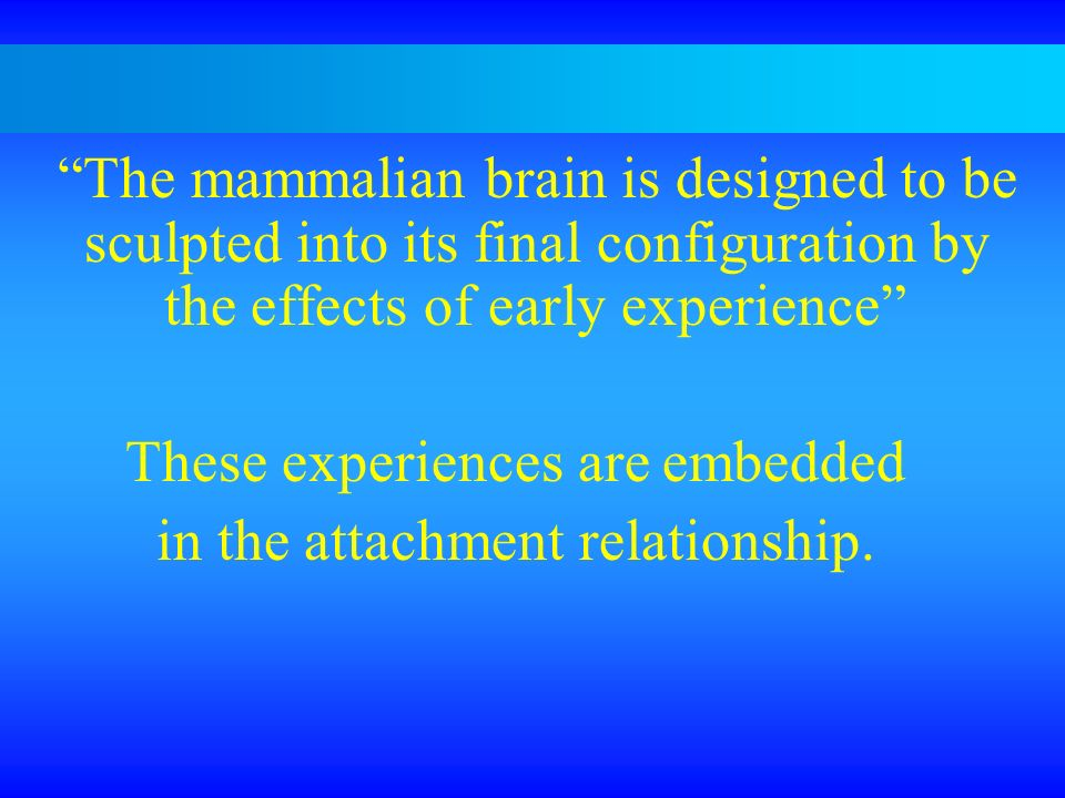 The mammalian brain is designed to be sculpted into its final configuration by the effects of early experience These experiences are embedded in the a
