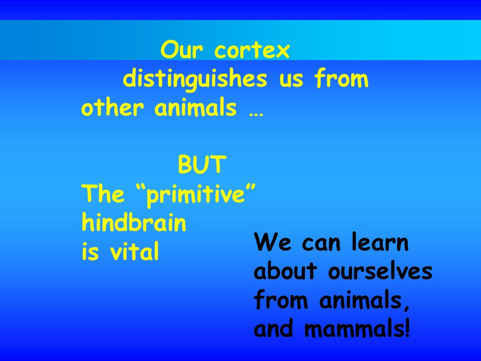 Our cortex distinguishes us from other animals … BUT The primitive hindbrain is vital We can learn about ourselves from animals, and mammals!