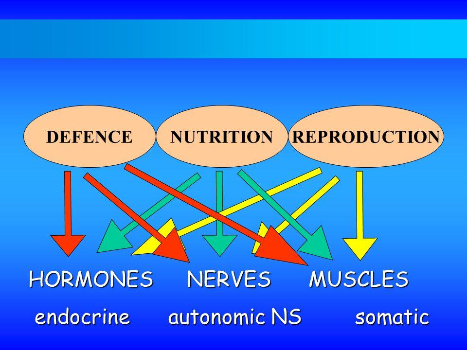 DEFENCENUTRITIONREPRODUCTION HORMONES NERVESMUSCLES endocrineautonomic NS somatic endocrineautonomic NS somatic