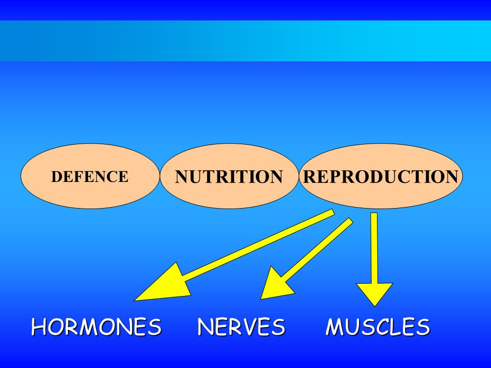 DEFENCE NUTRITIONREPRODUCTION HORMONES NERVESMUSCLES