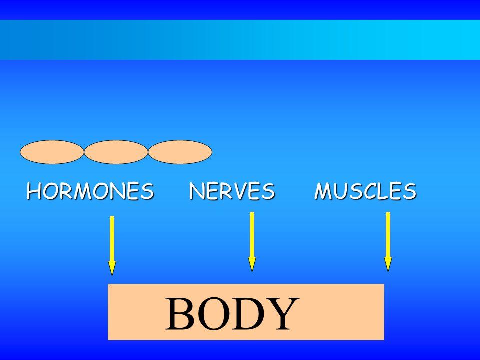 BODY HORMONES NERVESMUSCLES