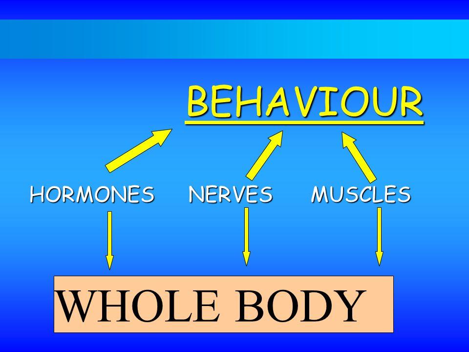 BEHAVIOUR WHOLE BODY HORMONES NERVESMUSCLES
