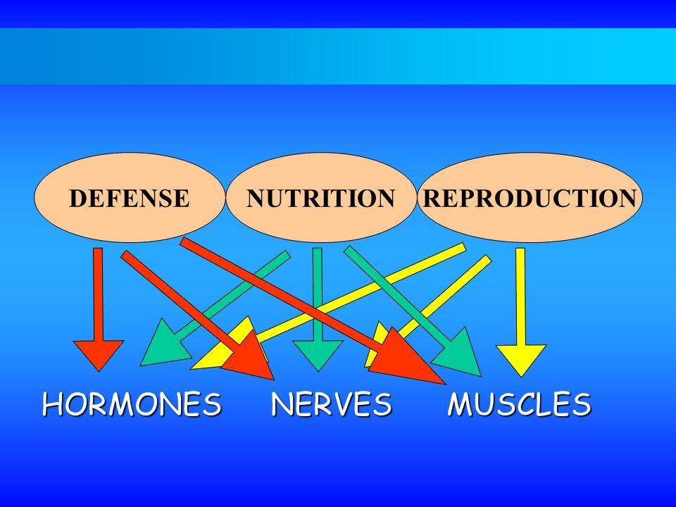 DEFENSENUTRITIONREPRODUCTION HORMONES NERVESMUSCLES