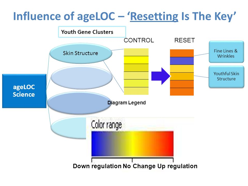 ageLOC Science Skin Structure Influence of ageLOC – Resetting Is The Key Youth Gene Clusters CONTROLRESET Down regulationUp regulationNo Change Diagra