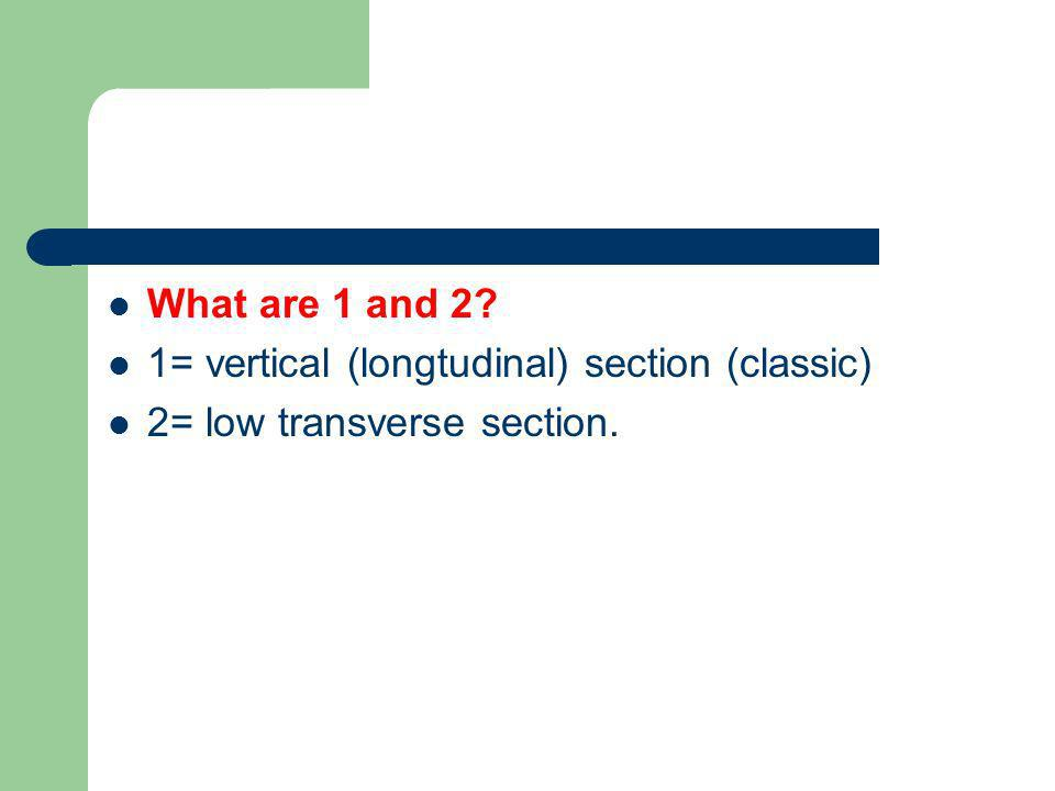 What are 1 and 2? 1= vertical (longtudinal) section (classic) 2= low transverse section.