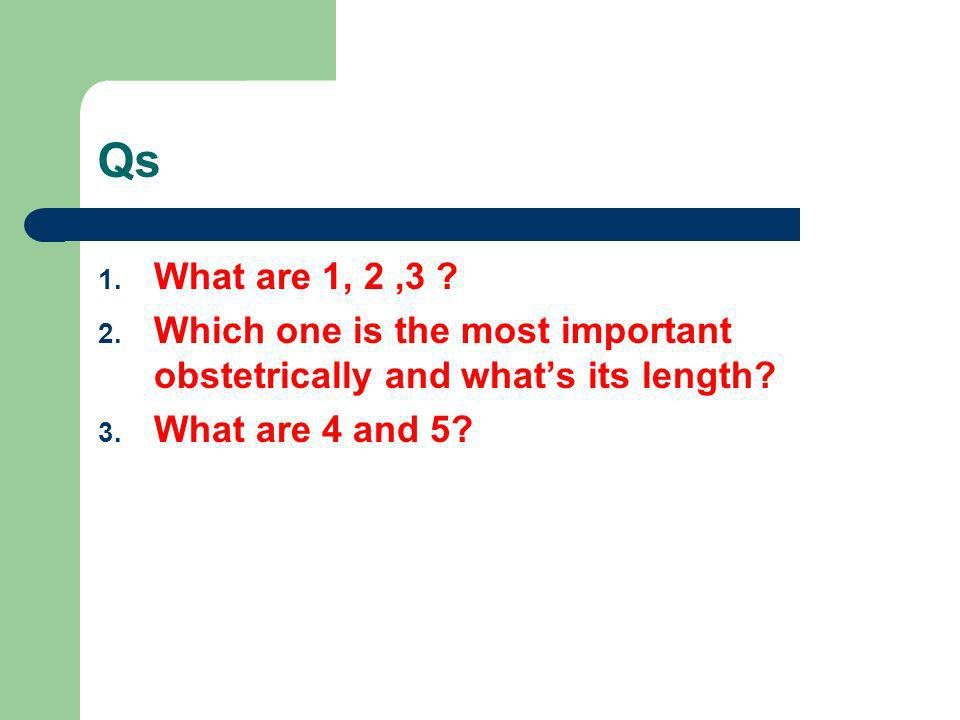 Qs 1. What are 1, 2,3 ? 2. Which one is the most important obstetrically and whats its length? 3. What are 4 and 5?
