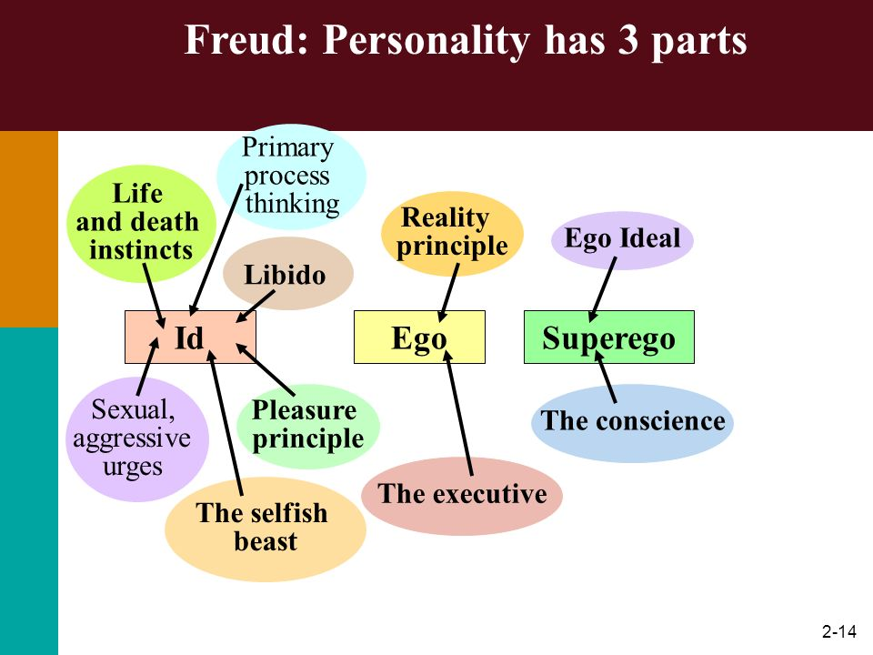 2-14 Freud: Personality has 3 parts SuperegoIdEgo Life and death instincts Sexual, aggressive urges The selfish beast Libido The executive Pleasure pr