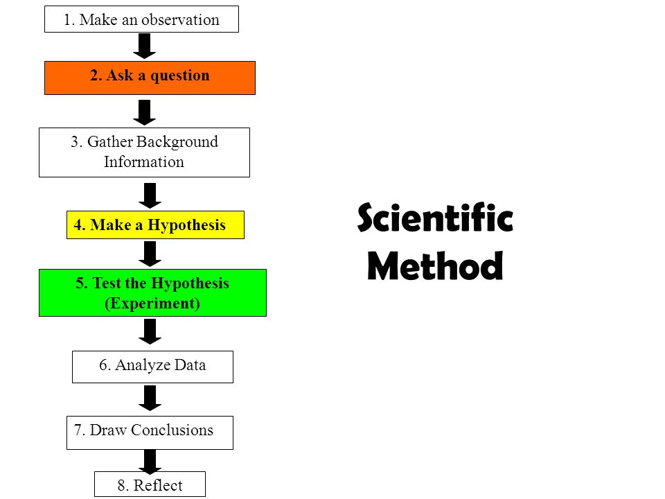 2. Ask a question Scientific Method 1. Make an observation 3. Gather Background Information 4. Make a Hypothesis 5. Test the Hypothesis (Experiment) 6