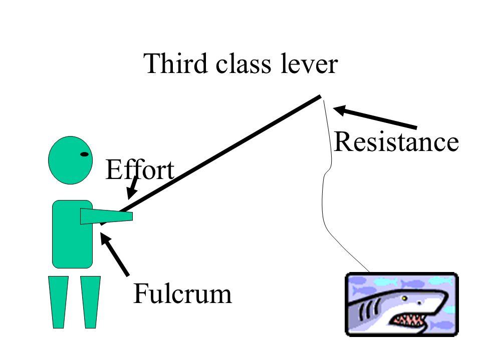 Third class lever Fulcrum Effort Resistance