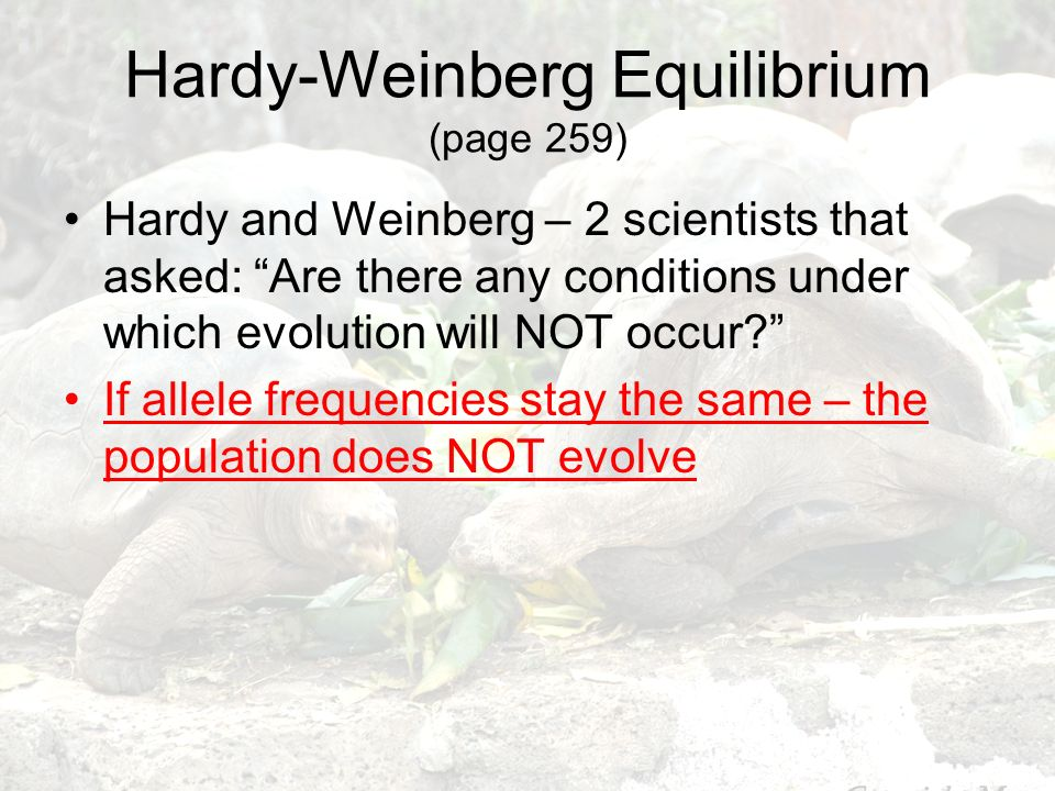Hardy-Weinberg Equilibrium (page 259) Hardy and Weinberg – 2 scientists that asked: Are there any conditions under which evolution will NOT occur? If