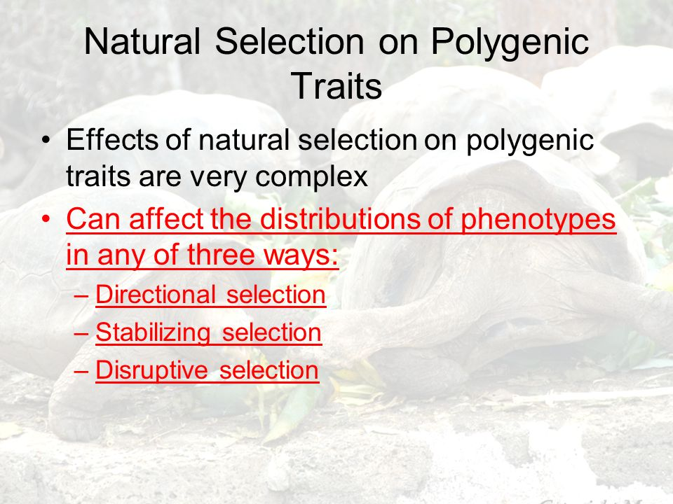 Natural Selection on Polygenic Traits Effects of natural selection on polygenic traits are very complex Can affect the distributions of phenotypes in