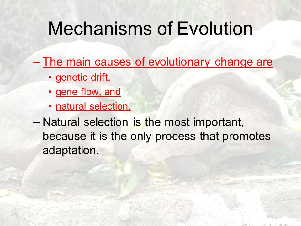 Mechanisms of Evolution –The main causes of evolutionary change are genetic drift, gene flow, and natural selection. –Natural selection is the most im