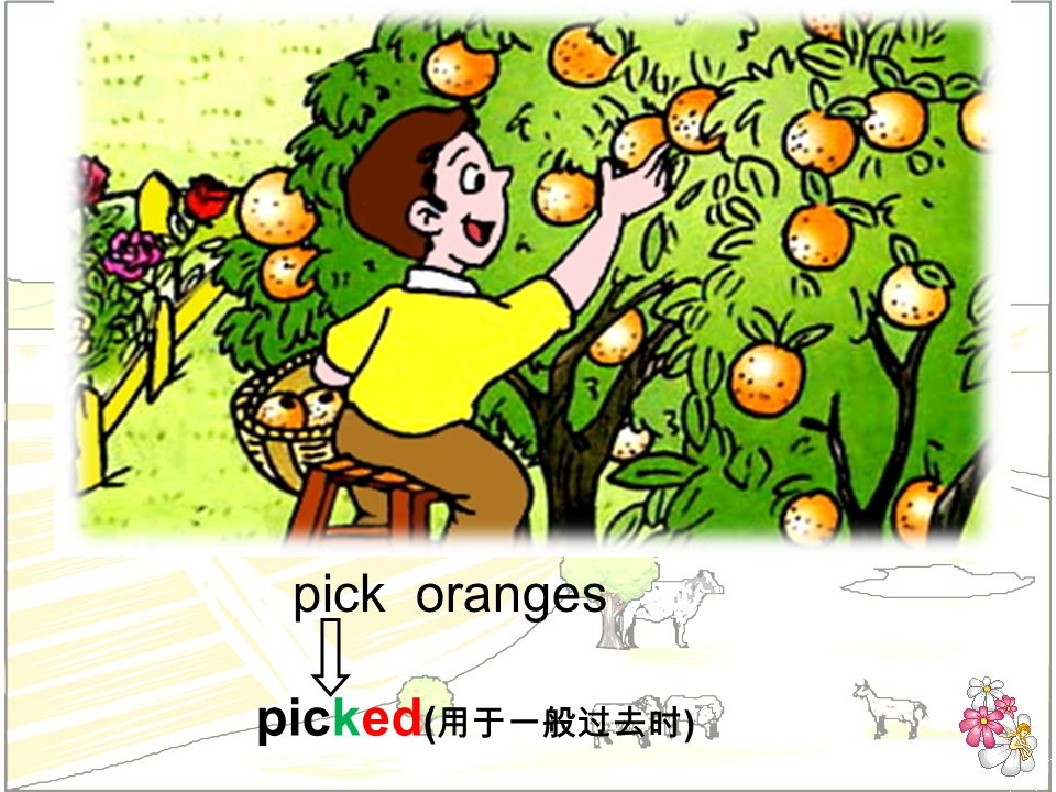 pick oranges picked ( )