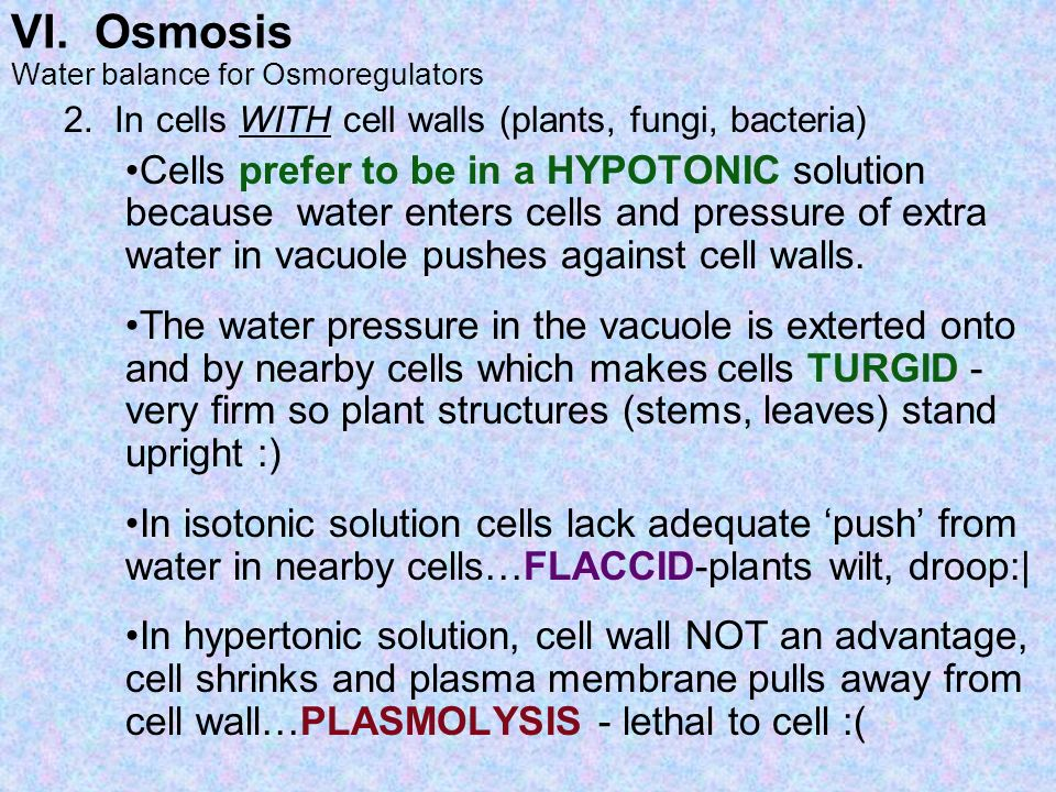 VI. Osmosis Water balance for Osmoregulators 2. In cells WITH cell walls (plants, fungi, bacteria) Cells prefer to be in a HYPOTONIC solution because