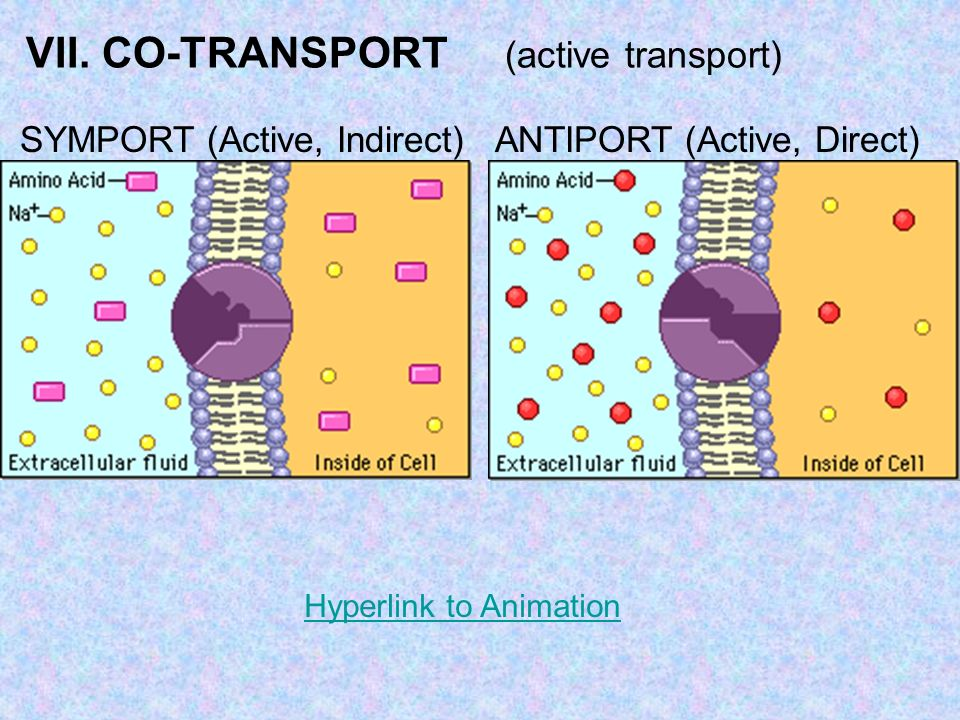 VII. CO-TRANSPORT (active transport) SYMPORT (Active, Indirect) ANTIPORT (Active, Direct) Hyperlink to Animation