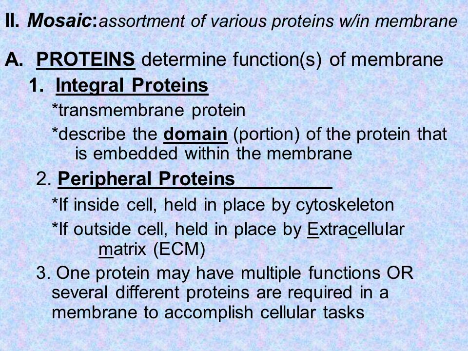 II. Mosaic: assortment of various proteins w/in membrane A.PROTEINS determine function(s) of membrane 1.Integral Proteins *transmembrane protein *desc
