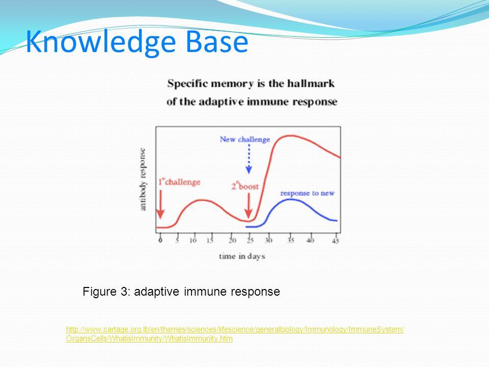 Knowledge Base Figure 3: adaptive immune response http://www.cartage.org.lb/en/themes/sciences/lifescience/generalbiology/Immunology/ImmuneSystem/ Org