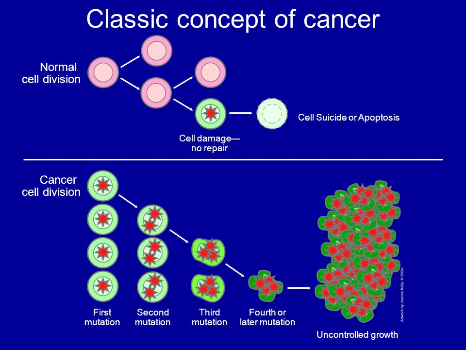 Classic concept of cancer Cancer cell division Fourth or later mutation Third mutation Second mutation First mutation Uncontrolled growth Cell Suicide