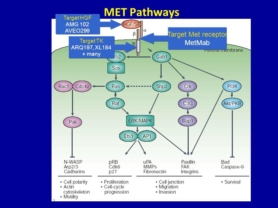 MET Pathways Target HGF AMG 102 AVEO299 Target Met receptor MetMab Target TK ARQ197, XL184 + many