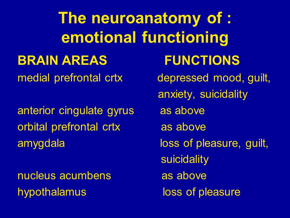 The neuroanatomy of : emotional functioning BRAIN AREAS FUNCTIONS medial prefrontal crtx depressed mood, guilt, anxiety, suicidality anterior cingulat