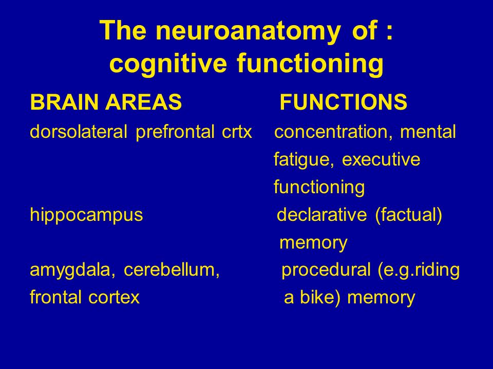 The neuroanatomy of : cognitive functioning BRAIN AREAS FUNCTIONS dorsolateral prefrontal crtx concentration, mental fatigue, executive functioning hi