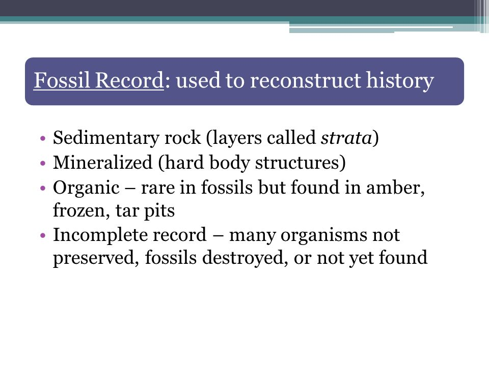 Fossil Record: used to reconstruct history Sedimentary rock (layers called strata) Mineralized (hard body structures) Organic – rare in fossils but fo