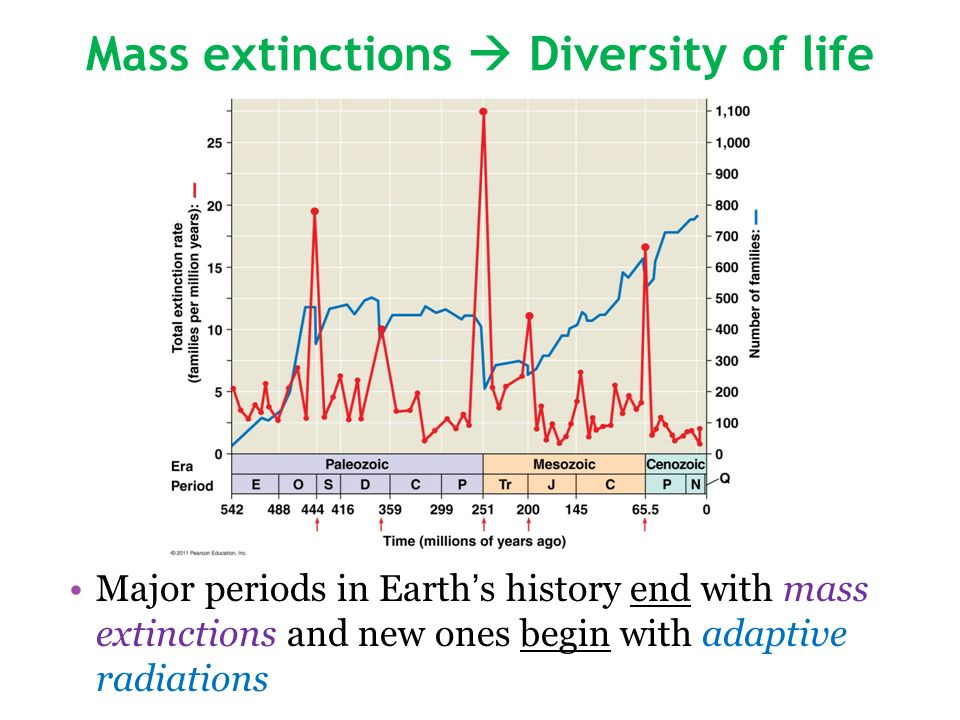 Mass extinctions Diversity of life Major periods in Earths history end with mass extinctions and new ones begin with adaptive radiations