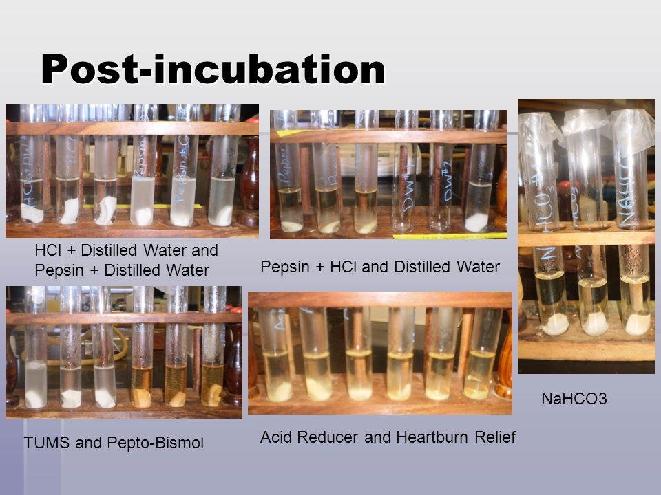 Post-incubation HCl + Distilled Water and Pepsin + Distilled Water Pepsin + HCl and Distilled Water TUMS and Pepto-Bismol Acid Reducer and Heartburn R