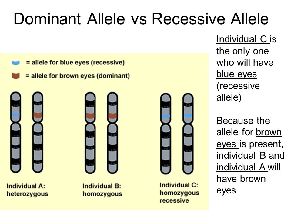 Dominant Allele vs Recessive Allele Individual C is the only one who will have blue eyes (recessive allele) Because the allele for brown eyes is prese
