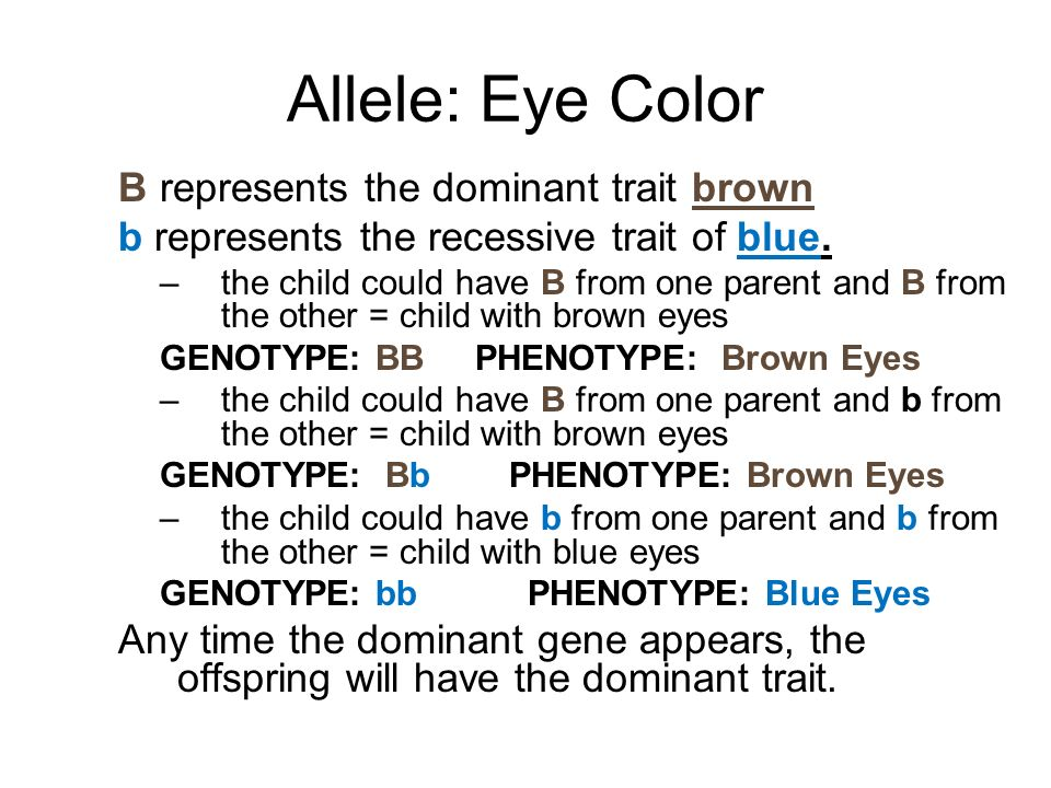 Allele: Eye Color B represents the dominant trait brown b represents the recessive trait of blue. –the child could have B from one parent and B from t
