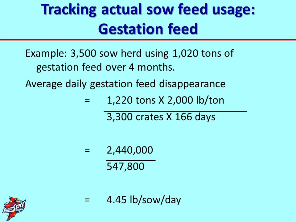 Tracking actual sow feed usage: Lactation feed: Option 1 Example: 3,500 sow herd with 525 crates farrows 2,950 litters using 325 tons of lactation feed over 4 months Average daily lactation feed disappearance = 325 tons X 2,000 lb/ton 525 crates X 122 days = 650,000 64,050 = 10.1 lb/sow/day [Under-estimates actual usage, due to empty crates, or pre-farrowed sows in crates.