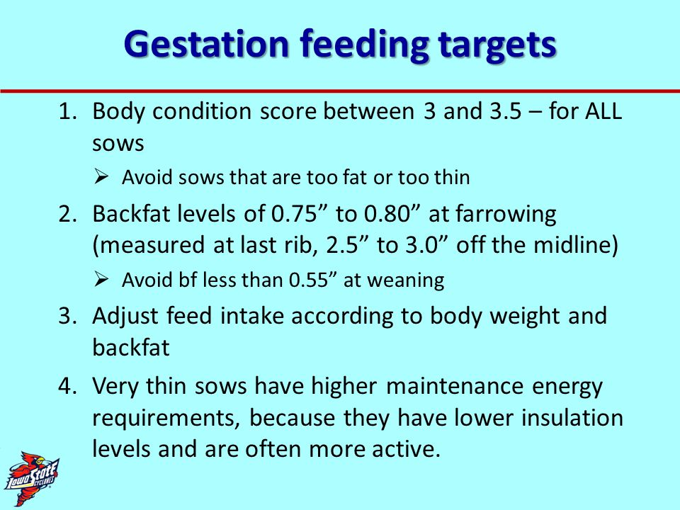 Gestation feeding targets 1.Body condition score between 3 and 3.5 – for ALL sows Avoid sows that are too fat or too thin 2.Backfat levels of 0.75 to
