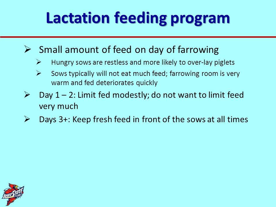 Lactation feeding program Small amount of feed on day of farrowing Hungry sows are restless and more likely to over-lay piglets Sows typically will no