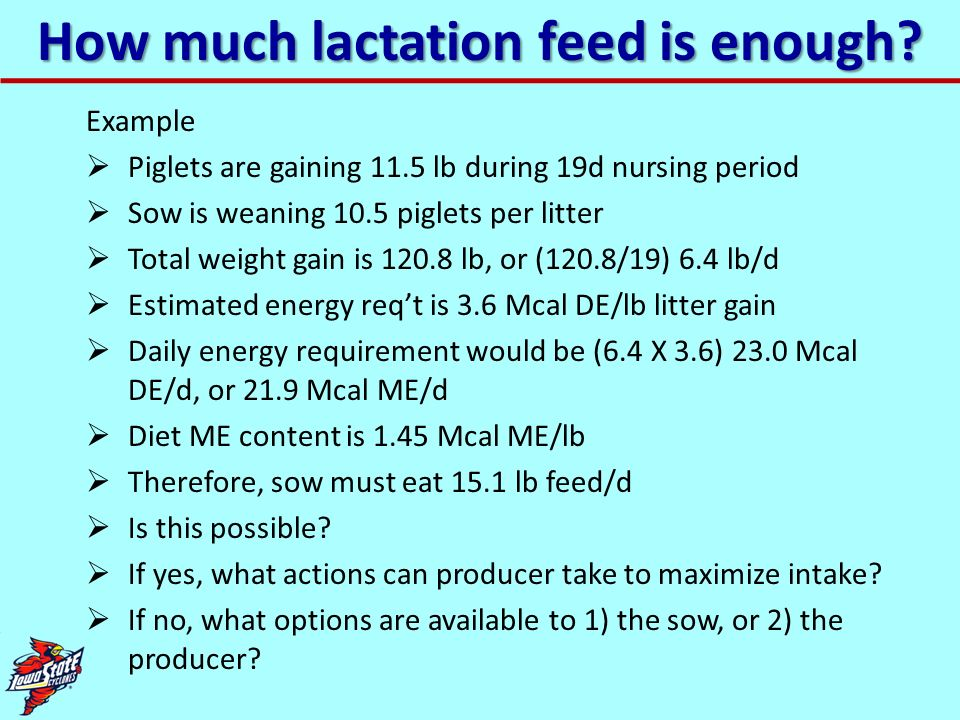 How much lactation feed is enough? Example Piglets are gaining 11.5 lb during 19d nursing period Sow is weaning 10.5 piglets per litter Total weight g