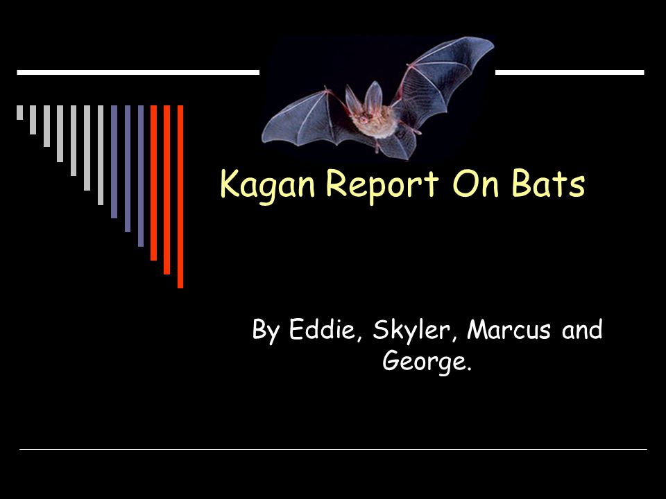 Bat facts Bats are nocturnal (sleep in the day and wake in the night) Its dark at night, so its hard to see.