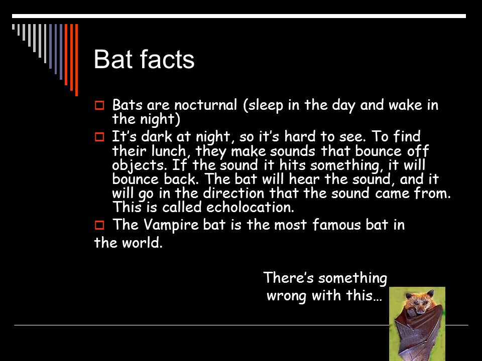 Bat facts Bats are nocturnal (sleep in the day and wake in the night) Its dark at night, so its hard to see. To find their lunch, they make sounds tha