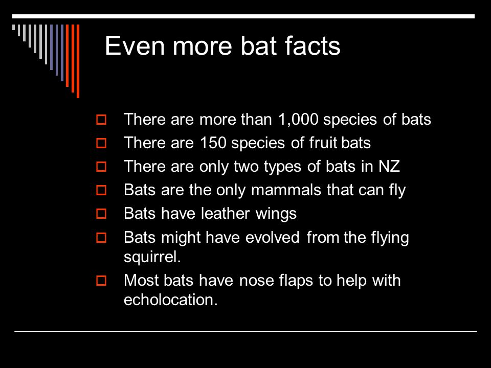 Even more bat facts There are more than 1,000 species of bats There are 150 species of fruit bats There are only two types of bats in NZ Bats are the