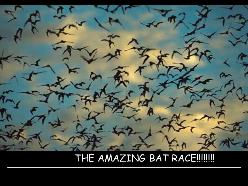THE AMAZING BAT RACE!!!!!!!!