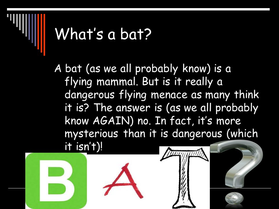 Whats a bat? A bat (as we all probably know) is a flying mammal. But is it really a dangerous flying menace as many think it is? The answer is (as we