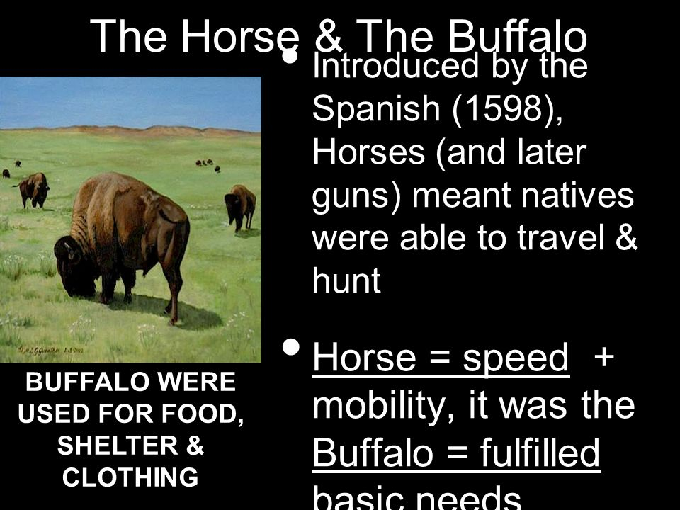 Introduced by the Spanish (1598), Horses (and later guns) meant natives were able to travel & hunt Horse = speed + mobility, it was the Buffalo = fulf