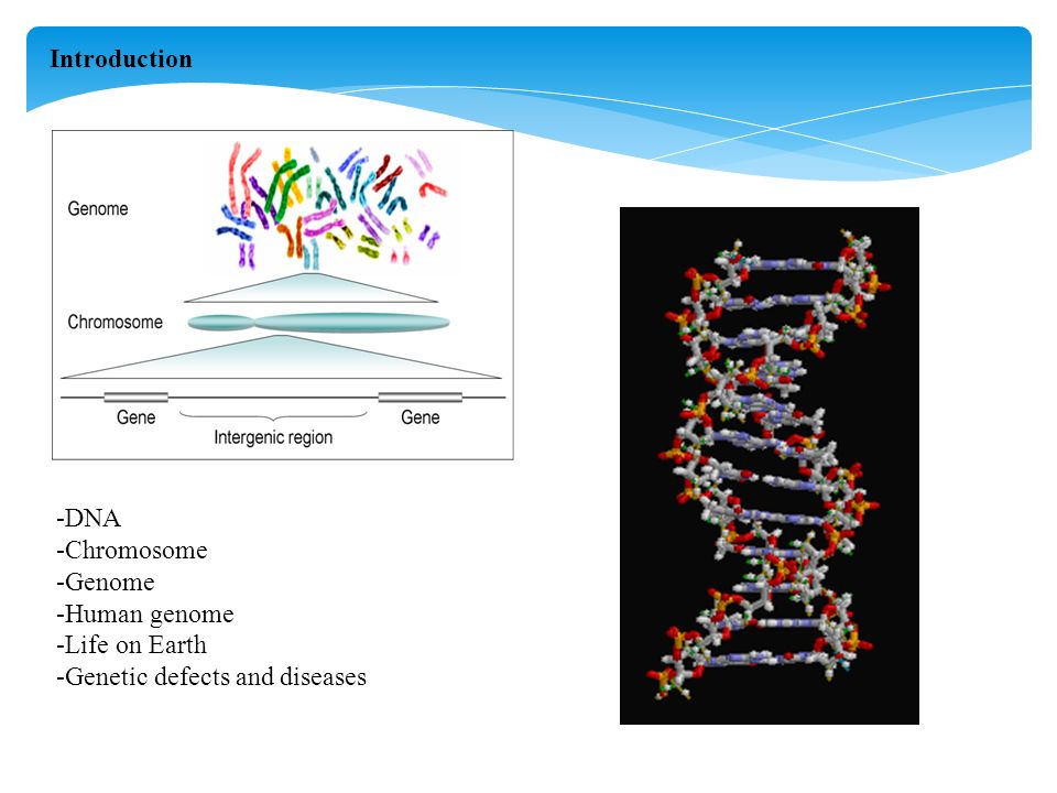 -DNA -Chromosome -Genome -Human genome -Life on Earth -Genetic defects and diseases Introduction