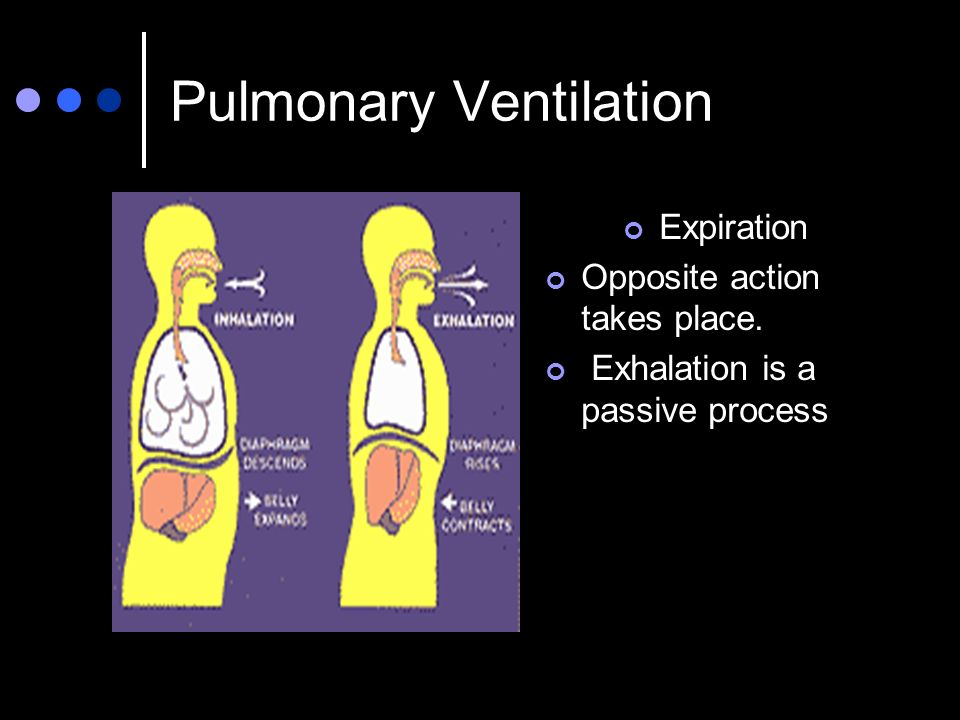 Pulmonary Ventilation Expiration Opposite action takes place. Exhalation is a passive process