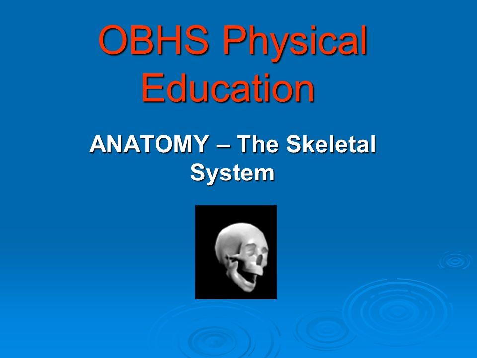 OBHS Physical Education OBHS Physical Education ANATOMY – The Skeletal System