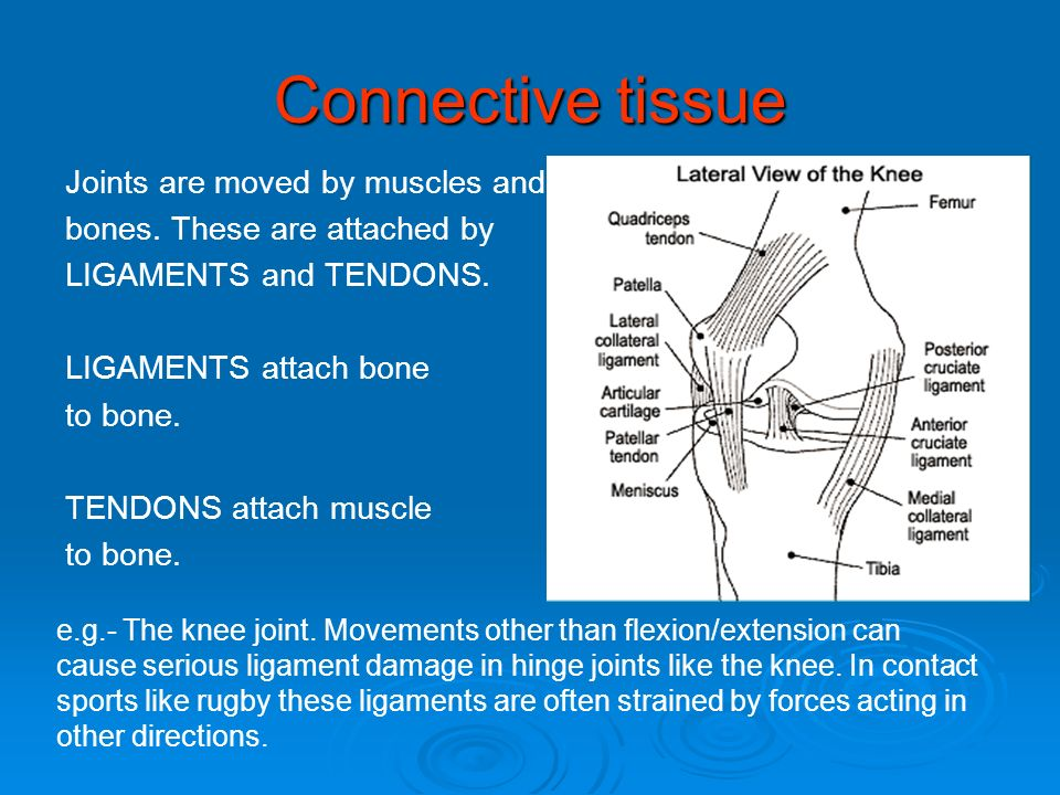 Connective tissue Joints are moved by muscles and bones. These are attached by LIGAMENTS and TENDONS. LIGAMENTS attach bone to bone. TENDONS attach mu