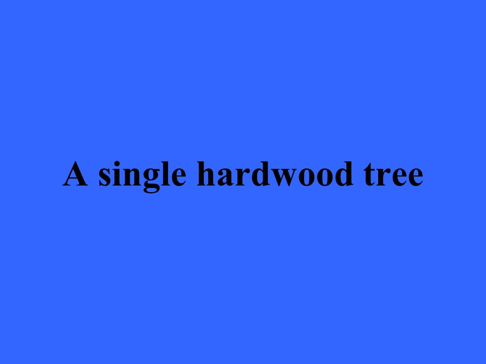 A single hardwood tree