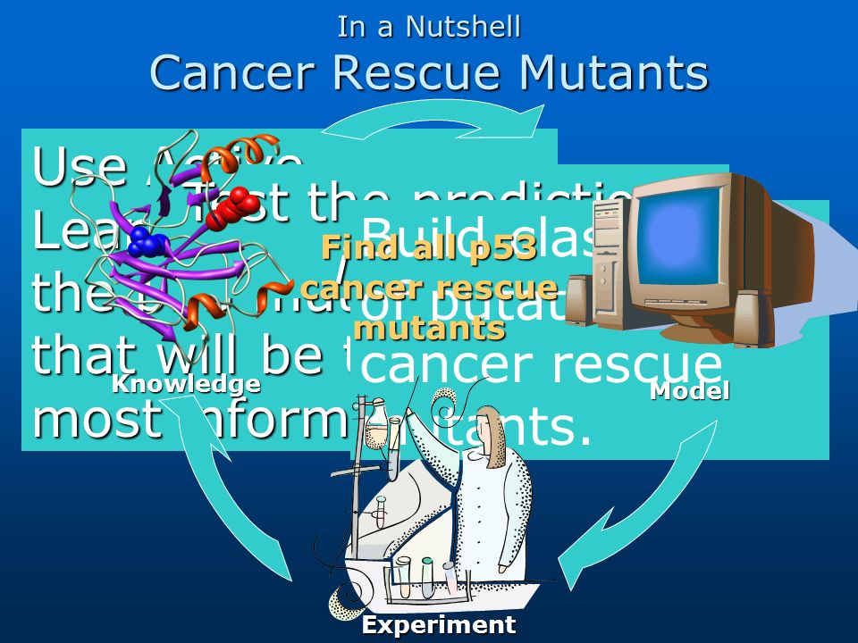 In a Nutshell Cancer Rescue Mutants Use Active Learning to select the p53 mutants that will be the most informative. Test the predictions in-vitro. Bu