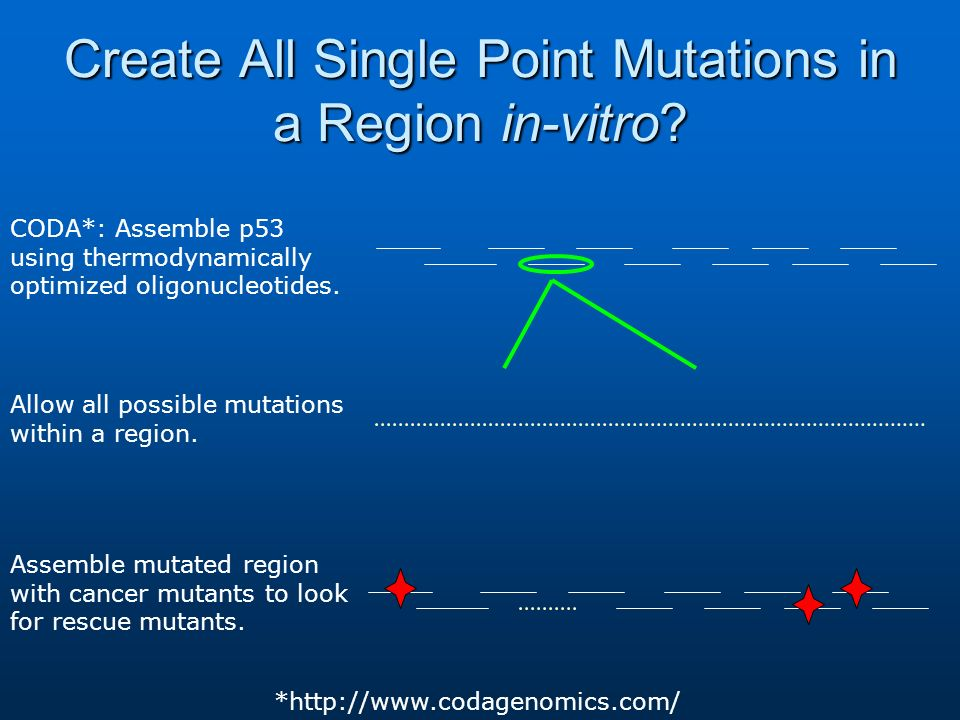 Create All Single Point Mutations in a Region in-vitro? CODA*: Assemble p53 using thermodynamically optimized oligonucleotides. Allow all possible mut